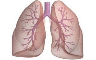 Как восстановить лёгкие от курения